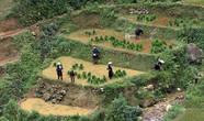 16.  Там, они снова ставятся в воду, и начинается процесс пересадки.  На севере Вьетнама поля принадлежат коллективам, на юге, они находятся в частной собственности. Вот не спросила, как с этим обстоят дела у Хмонгов. Наверное, всё-таки поделены между семьями. Но, индивидуазим индивидуализмом, выращивание же риса без помощи не обходится и, часто, молодые ростки выращиваются на полях какого-то одного крестьянина, на след. год на полях другого и так по кругу.  Посадка должна идти быстро, вот и помогают все друг другу.