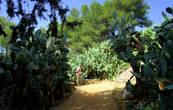 Атмосферу древности и нынешней заброшенности усиливают мощные заросли кактусов-сабресов, настолько старых и устрашающих,  что кажется, будто им, как и здешним оливам,  уж по паре тысяч лет.