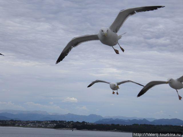 Чайки над бортом — значит мы еще недалеко от земли