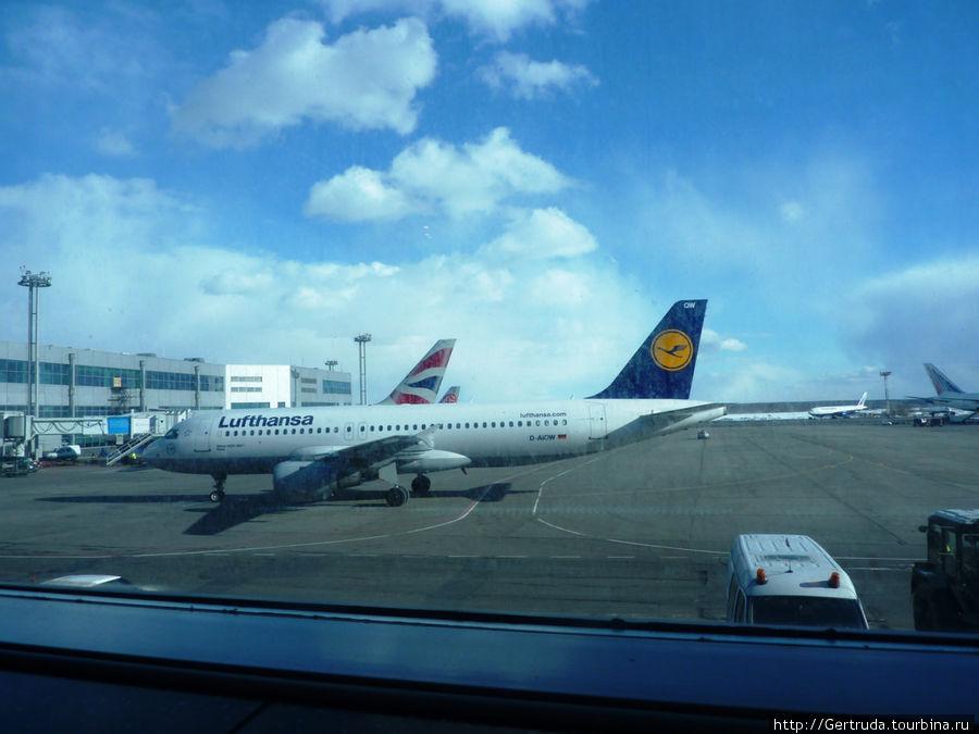 Самолет немецкой авиакомпании в Домодедово