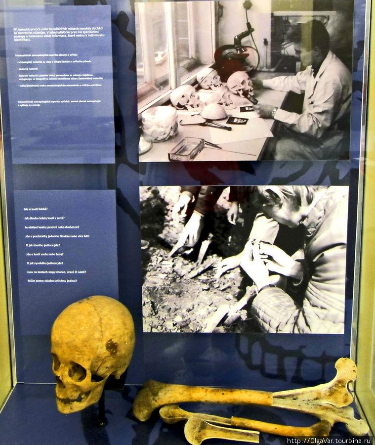 Этот метод помогает установить, не принадлежит ли череп, обнаруженный, к примеру, на месте преступления, конкретному лицу