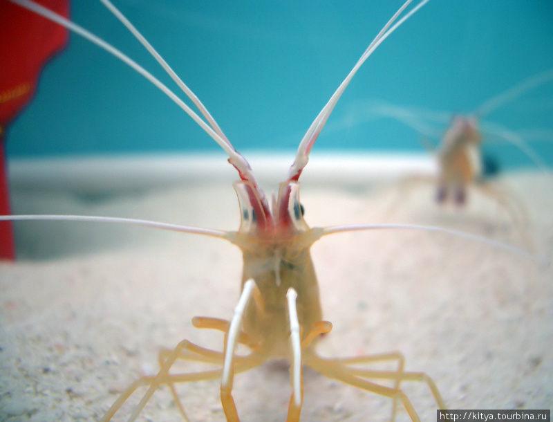 Существо из районного аквариума.