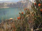 Растительность возле Килотоа