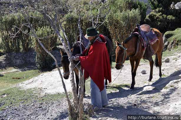 Мулы напрокат Пухили, Эквадор