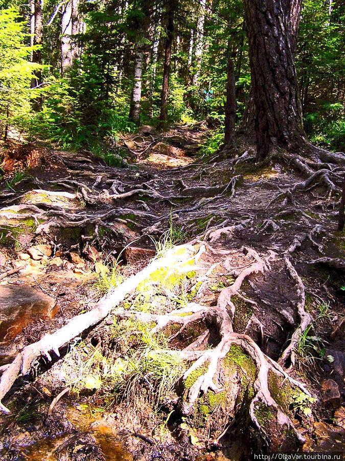 Кровеносная система Таганайского леса