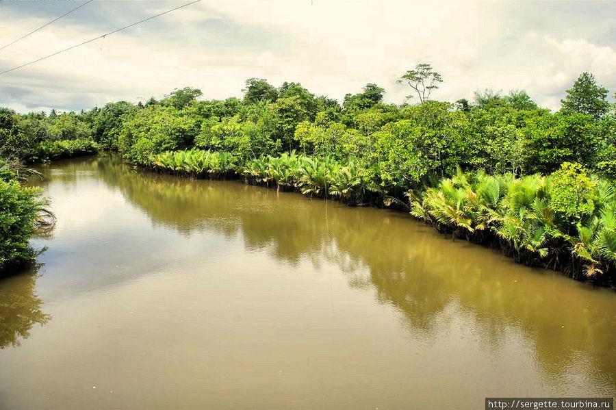 Мангровая река. Говорят что такой цвет вода приобретает после рисовых полей