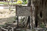 На это дерево подвешивались усилки, заглушающие стоны жертв