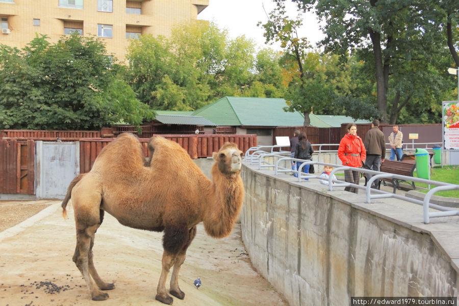 картинки зоопарк москва животные