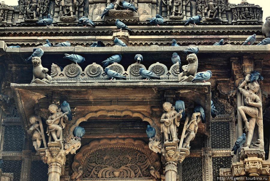 принцип ахимсы, т.е. непричинения зла любым живым существам — один из столпов Джайнизма. думаю голуби это хорошо чувствуют