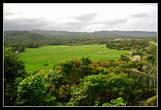 Смотровая площадка. Рисовые поля