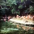 Зоопарк Санто-Доминго