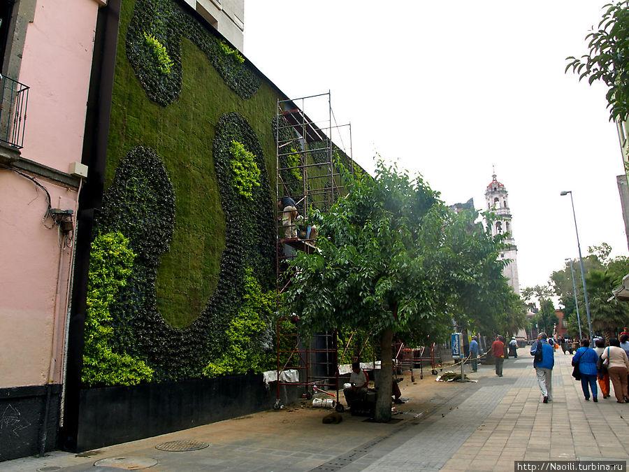 Еще недавно это была просто стена, но ее решили озеленить