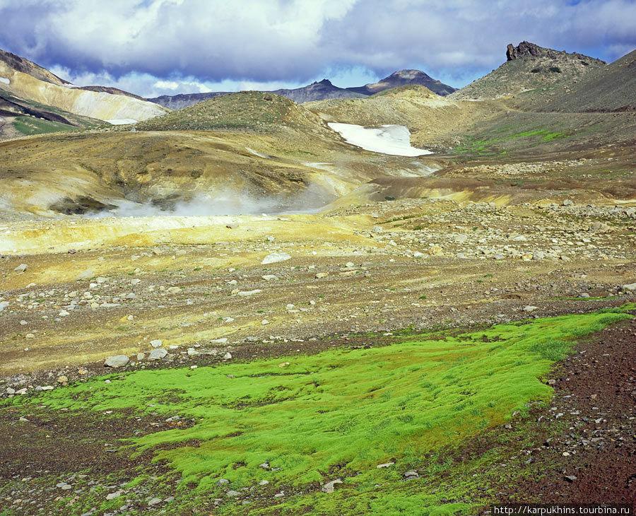 Тепло земли в сочетании с влагой, создаёт условия для жизни необычной растительности.
