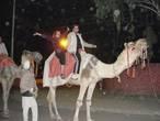 Застали верблюдов идущих со свадьбы! Решили покататься ))