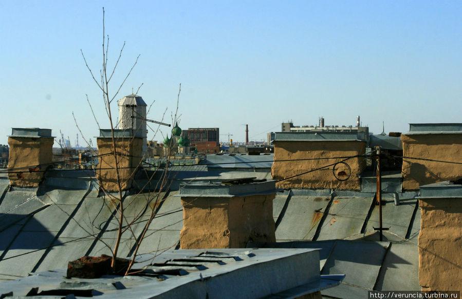 И на крышах растут деревья