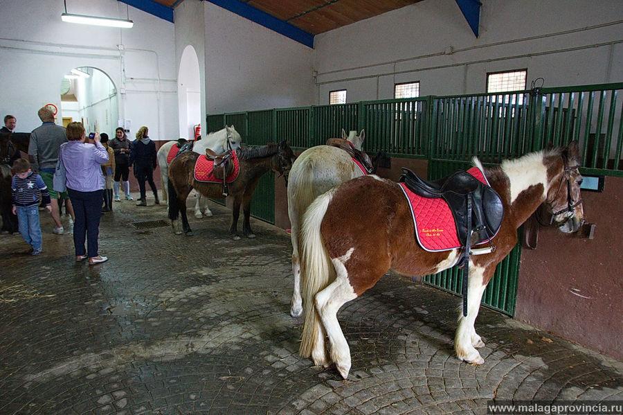 Школа верховой езды Эстепона, Испания