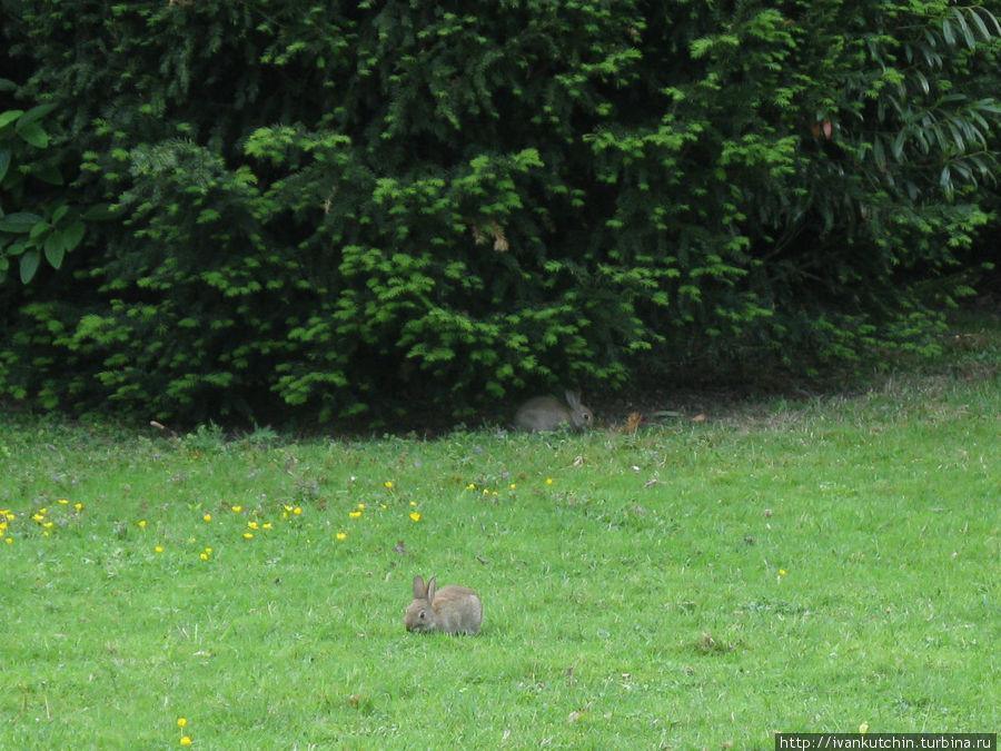 В парке кролики чувствуют себя как дома, впрочем, скорее всего, они там и живут