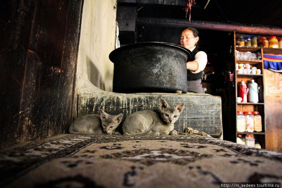Котята греются у печки