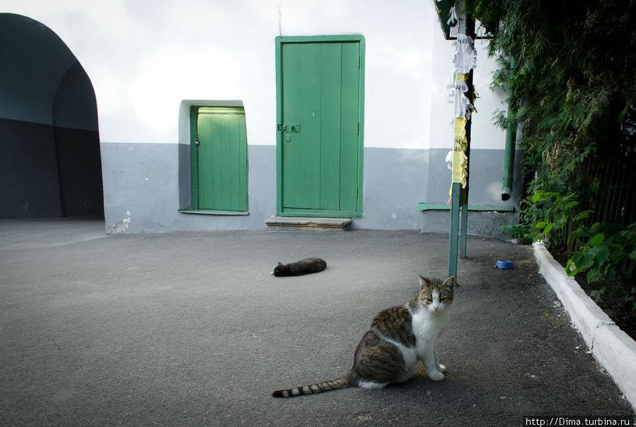 Кошка лениво охотилась на птицу. Мы ей, кажется, помешали
