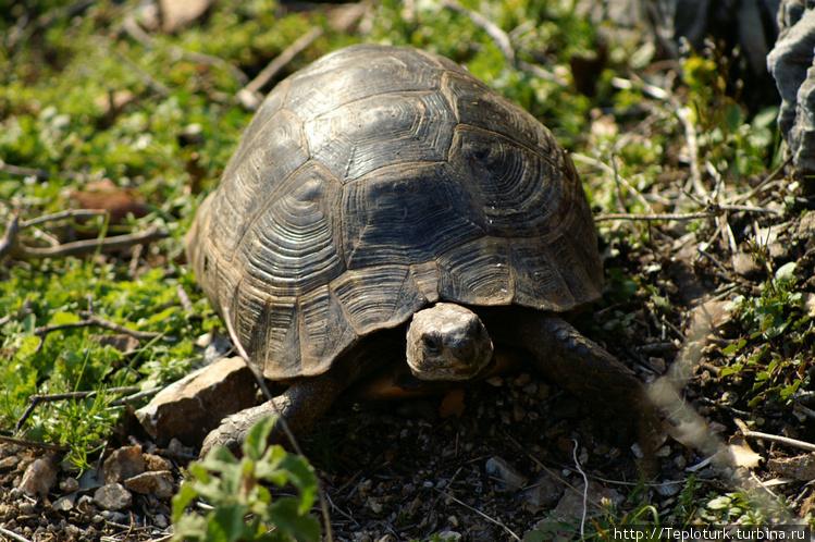 Черепаха в горах