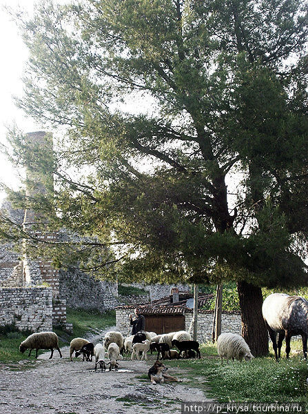 В крепости проживают люди. Среди руин мечети обитатели крепости  пасут скот.