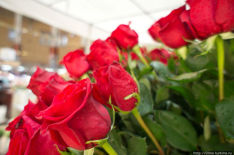 Розы уже не первой свежести