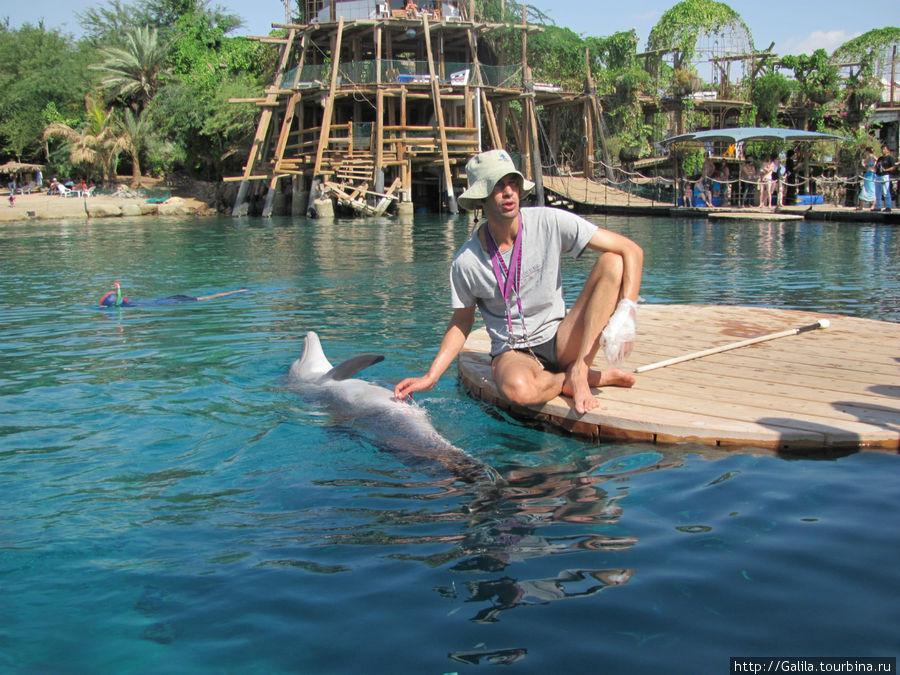 Дрессировщик рассказывает о дельфинах.