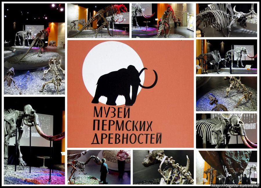 На территории России существует более сотни захоронений зверообразных рептилий пермского периода. Огромное кладбище древних ящеров, примеру, найдено в окрестностях Очёра, Ежово, на левом берегу реки Сылвы в районе Чекарды Пермского края