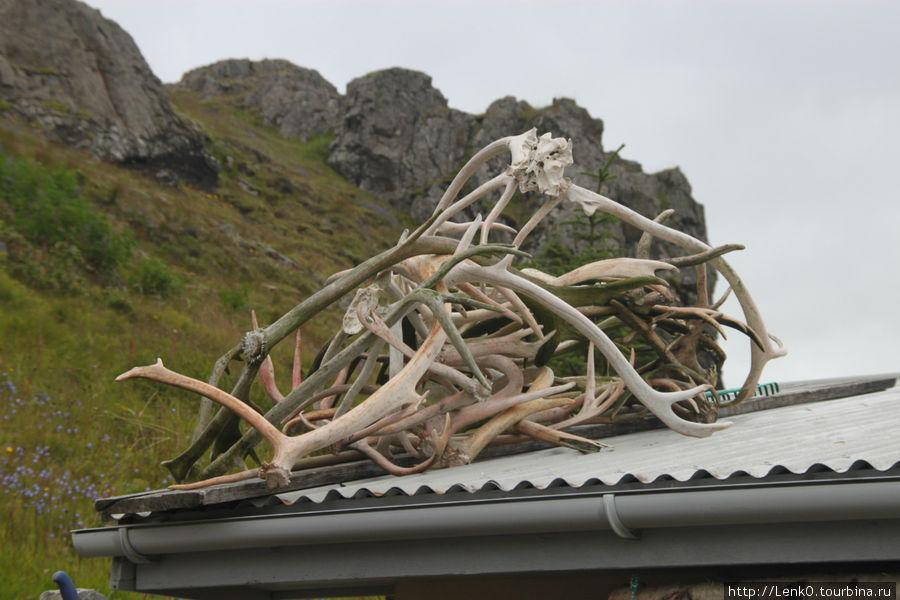 крыша подсобки
