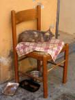 В Чинке-Терре очень много кошек, прямо культ какой-то, и у многих в окраске присутствовал необычный оттенок желтого