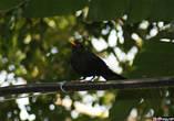 Первой нас здесь встретила эта надменная птичка