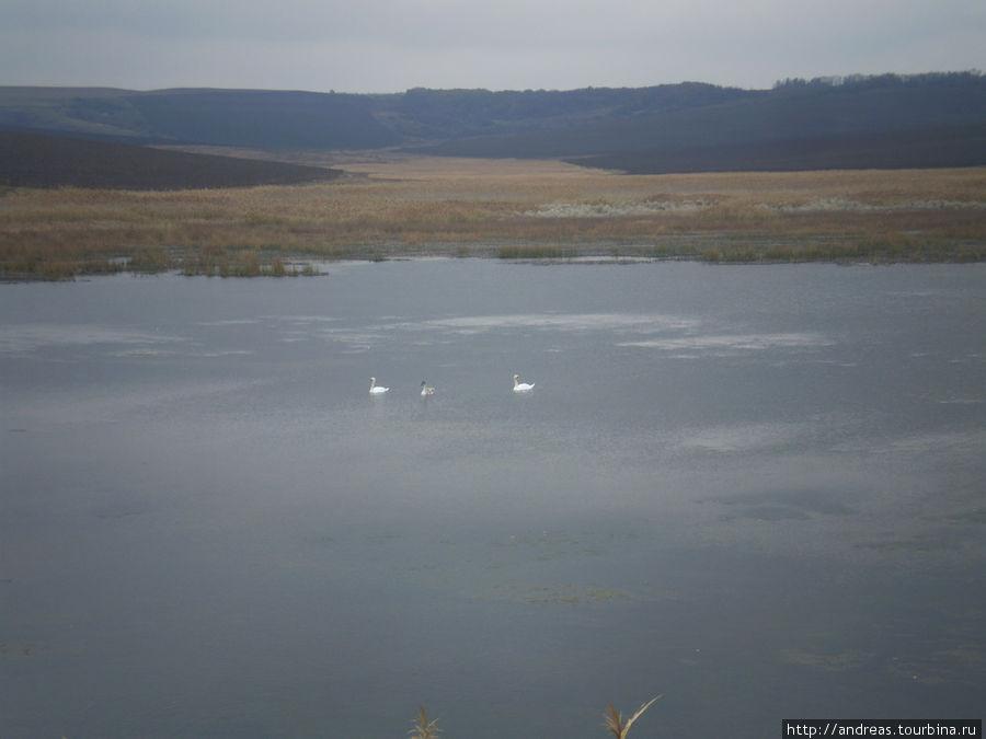 Увидеть лебедей было удивительно в такой загрязнённой территории