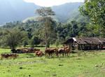 Мы снова вернулись на поляну, где паслись коровки, не хватало только пастушка