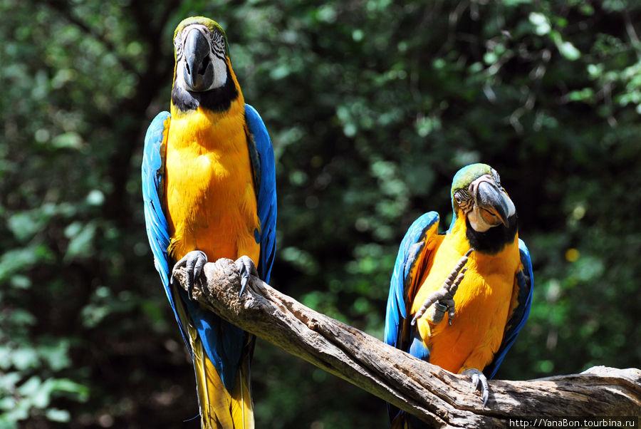 Очень шумные птицы