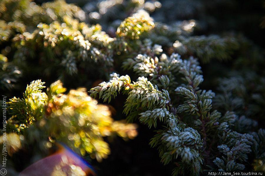 Иней с бриллиантовыми искрами солнечных лучей Тюнгур, Россия