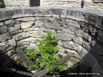 Замковый колодец. Его глубина — 36 метров. Соединялся с запрудой реки. Колодец в свое время помог выдержать турецкую осаду.