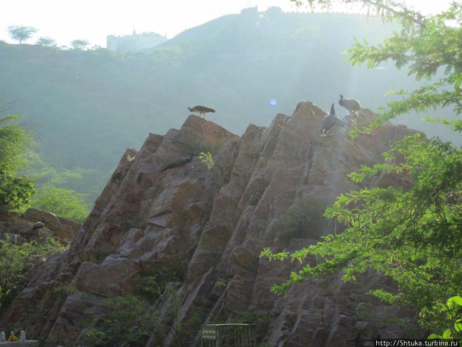 Джайпур, в долине между холмов