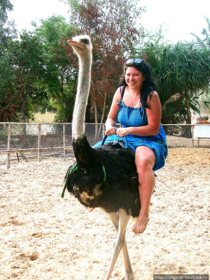Ну никак это страус не хотел бежать, а лениво прохаживался по периметру, а после стал даже немного прихрамывать...Видимо, нелегка была ноша