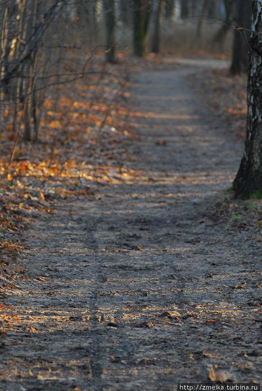 В самом парке между деревьями, лужайками и проч. проложено много тропинок, которые после дождя выглядят так: