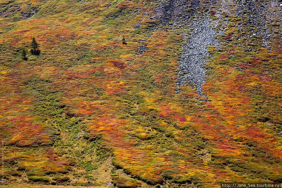 Алтайский ковер с казахско-монгольским рисунком, натуральный :)