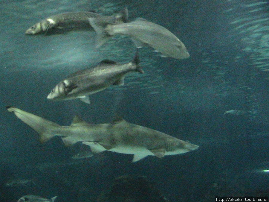 Морская живность в барселонском аквариуме.