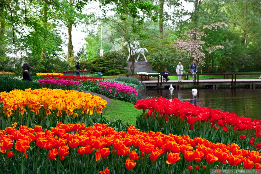 Картинки по запросу королевский парк цветов кёкенхоф нидерланды