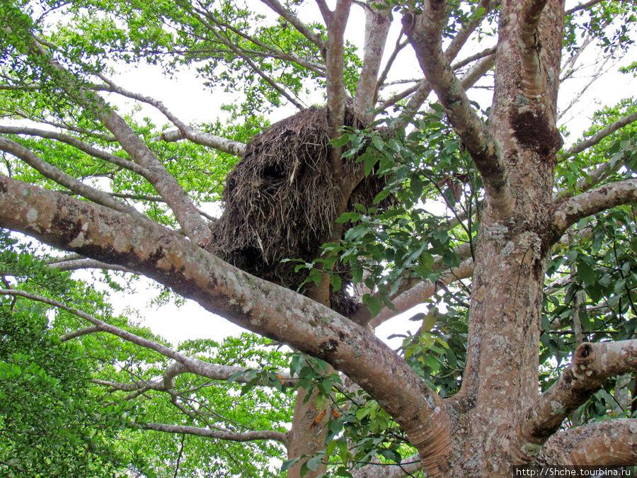 это тоже типа гнездо, но чье — вопрос