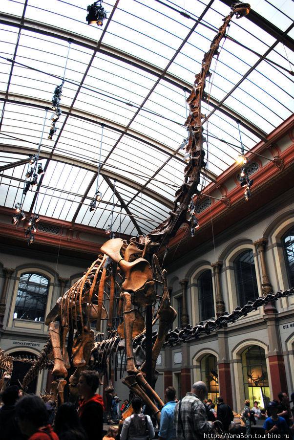 Самый большой макет динозавра. Практически все кости являются подлинными.