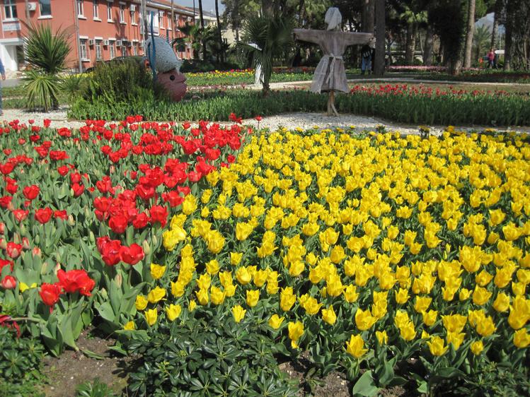 Тюльпаны на центральной п