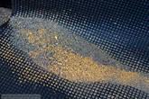 Золото оседает на специальных рифлёных резиновых ковриках. Раз в день происходит съём золота. Для этого приезжает специальная команда.