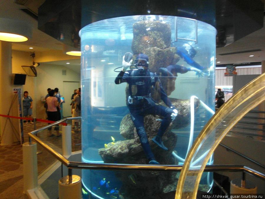 Не стесняясь моют аквариум
