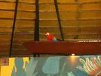 Умные птицы рассаживались согласно некупленных ими билетов