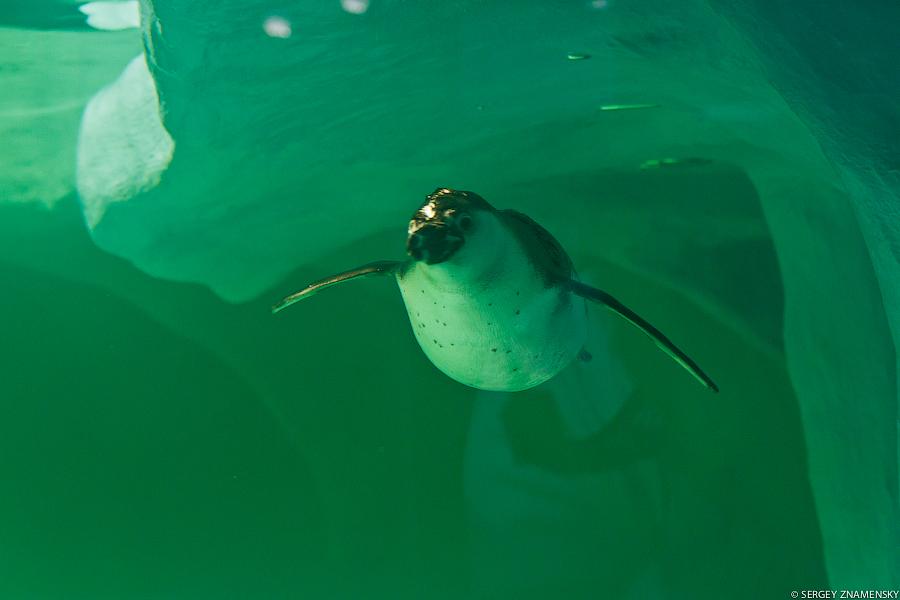 Сразу после входа в сам океанариум появляется первый постоялец: