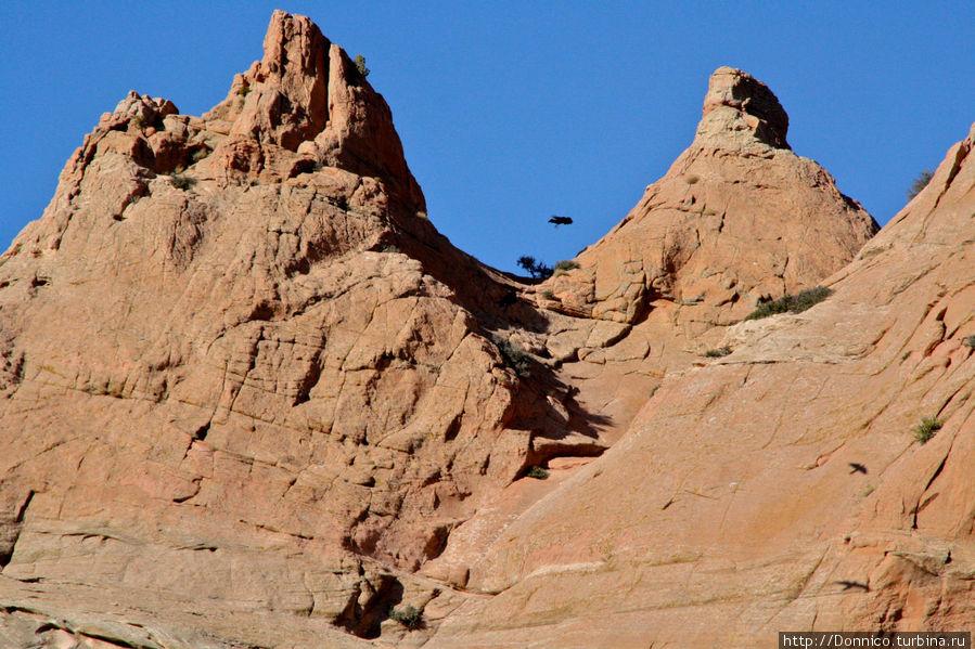 глядя на эту фотографию кажется что это летит муха, но это на самом деле довольно таки крупная ворона